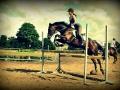 konie_22