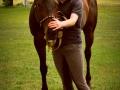 konie_4