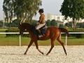 konie_6