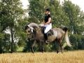 konie_7